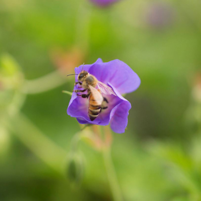 The LaurelRock Company provides sustainable offerings including planting bee-friendly gardens.